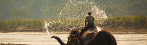 Ινδικός ελέφαντας
